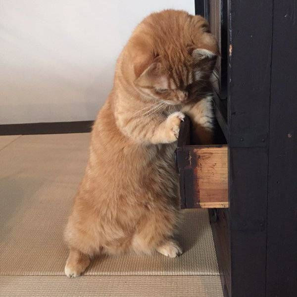 Cat looking for a knife - Cat meme - Meme