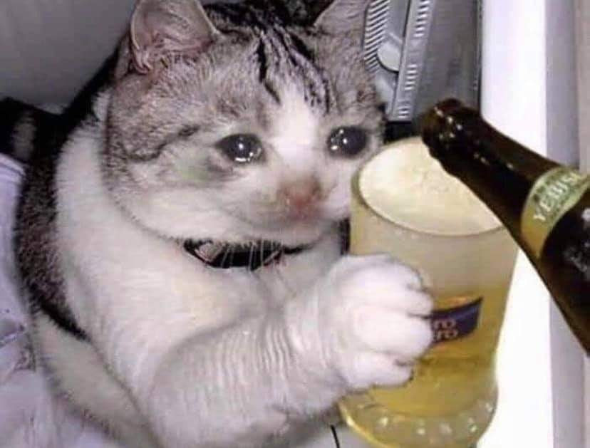 Crying cat drinks beer