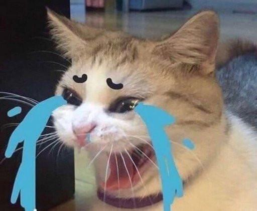 Cat crying aloud meme