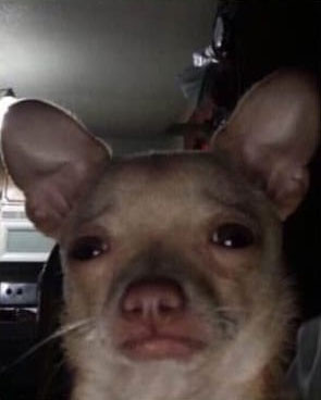 Sad dog using front camera with human-like face