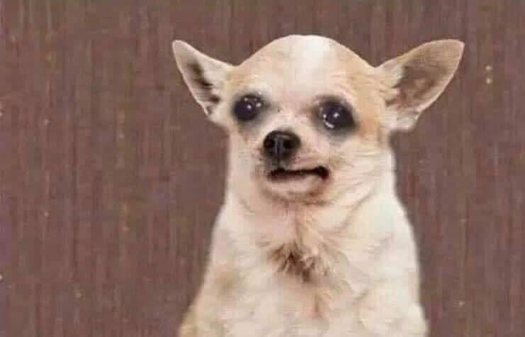 Dog about to cry meme