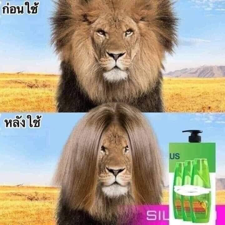 Lion's mane hair after using shampoo - advertisement meme
