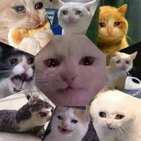 9 saddest cats on the Internet crying in one picture