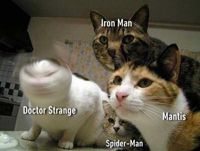 Cats as Doctor Strange, Iron Man, Spider-Man and Mantis meme