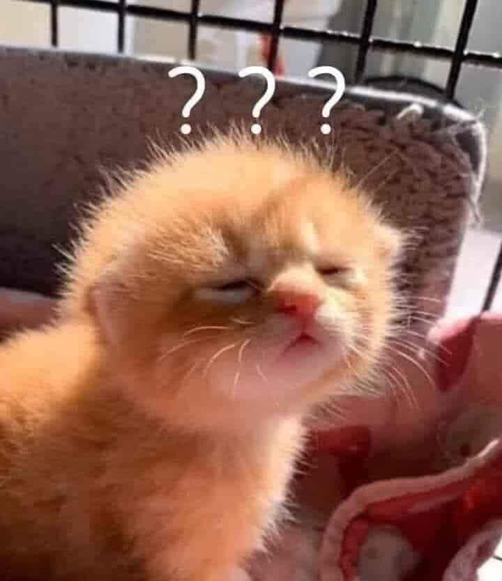 Cute cat with question marks meme