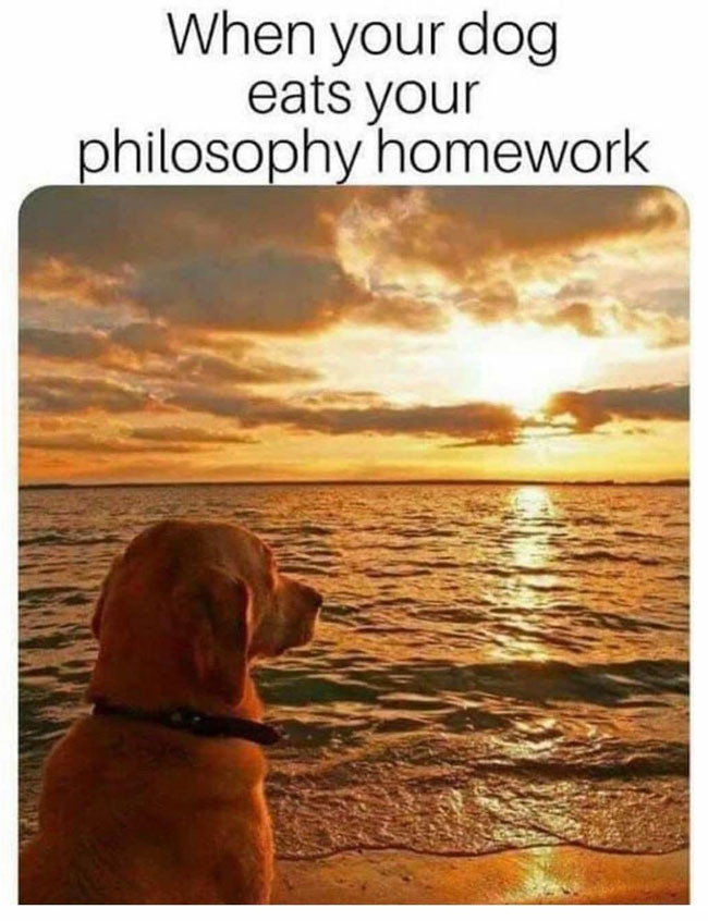 When your dog eats your philosophy homework - Dog feeling deep at sea meme