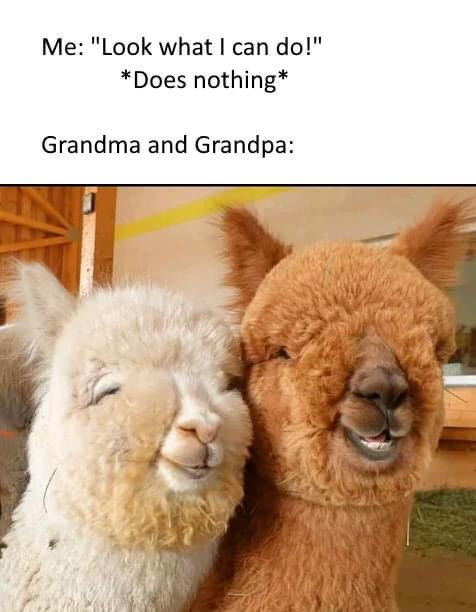 Me: Look what I can do! Grandma and grandpa alpacas smiling meme
