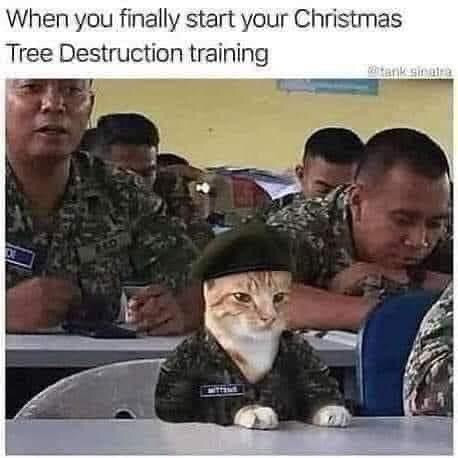 Cat meme: When you finally start your Christmas Tree Destruction training