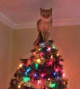 Cat standing on top of Christmas tree meme