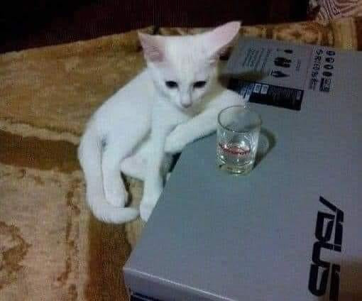 Sad white cat sitting with a shot of alcohol