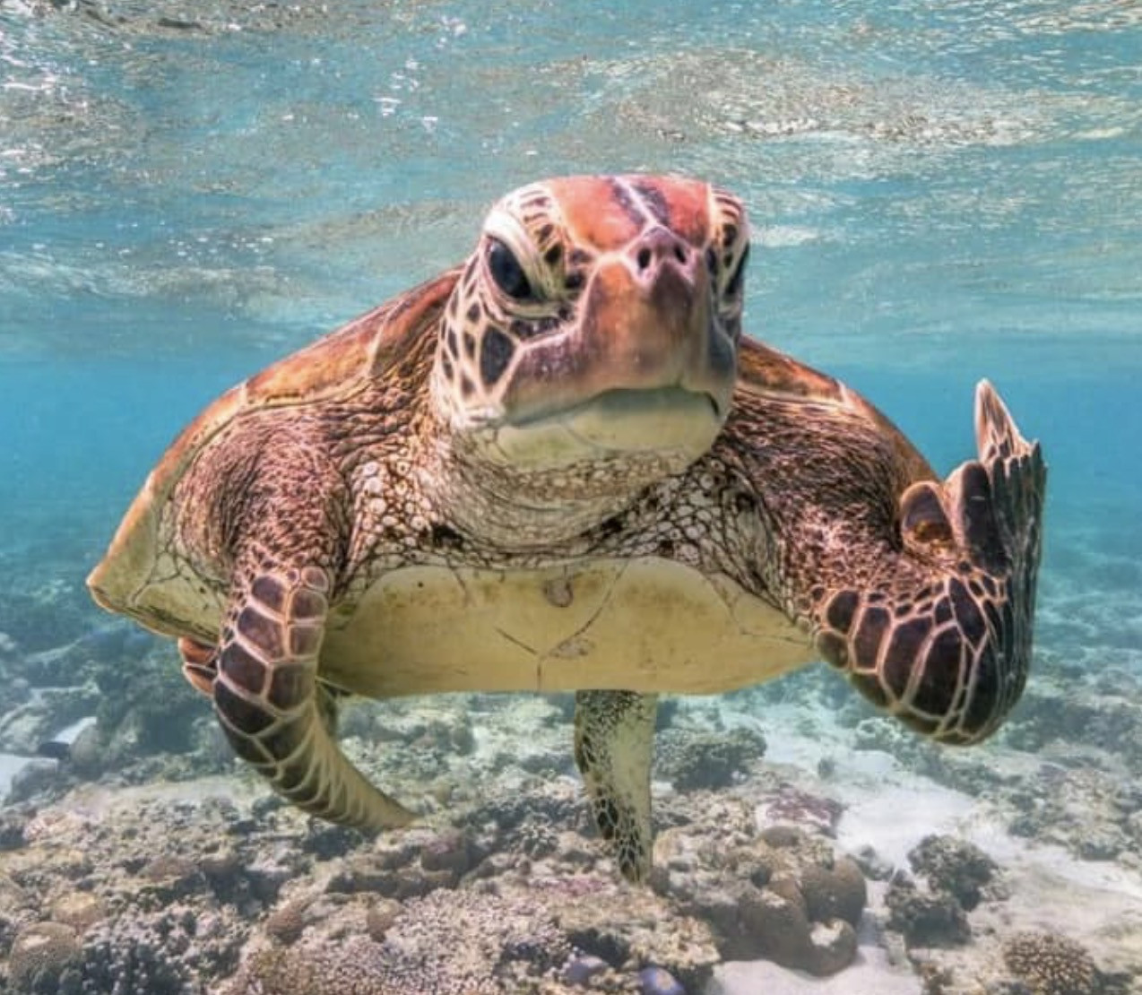 Sea turtle middle finger meme