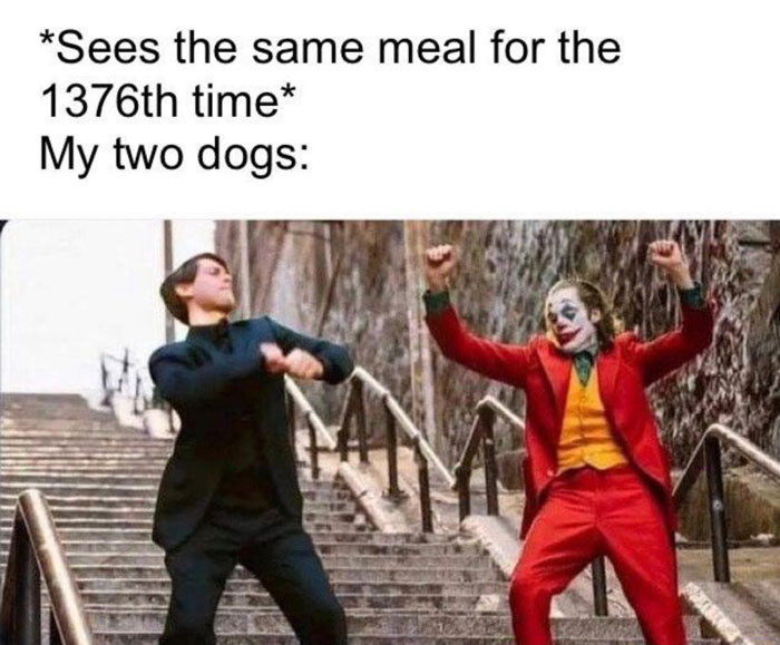 My two dogs see same meal for the 1376th time - Joker and Peter Parker Dancing meme