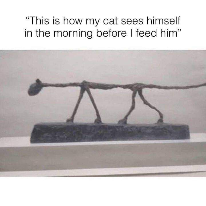 This is how my cat sees himself in the morning before I feed him